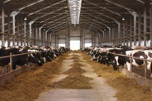 Visalia CA Dairy Barn Windows